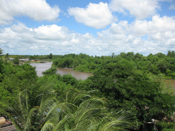 A view of the Canje River and surrounding forest in Guyana, taken from the Canje Bridge. Photo by Loriski/Wikimedia Commons