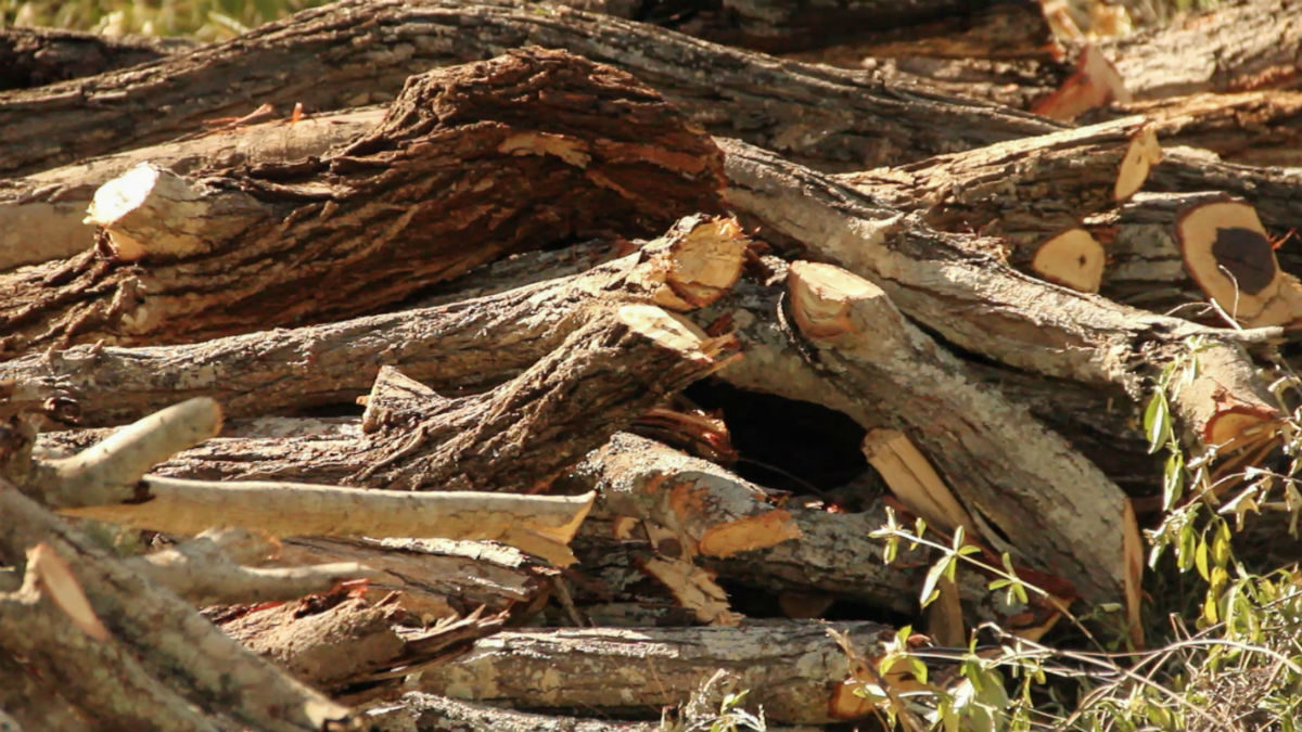 A pile of illegally cut timber discovered by a patrol group in Tanzania. Photo by Sophie Tremblay