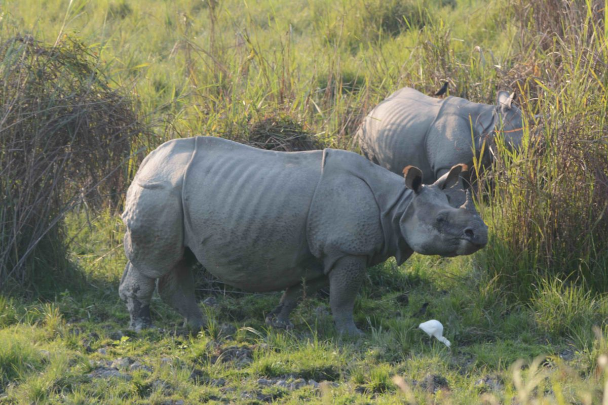 Kaziranga National Park is home to most of India's rhinos. Photo by Udayan Dasgupta.