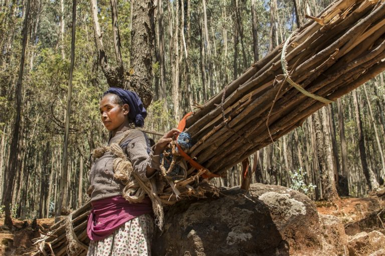 Amone Ayesa collects wood in the Entoto forest outside of Addis Ababa, Ethiopia. Photo by Maheder Haileselassie Tadese