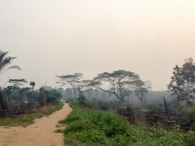Logging roads are often a first step toward deforestation, as seen here in the Congo Basin for slash-and-burn agriculture. Photo by John C. Cannon