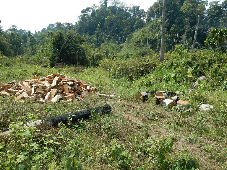 A recent photo from the Indawgyi Lake region showing timber and wood piles in the forest. Photo courtesy of Flora & Fauna International