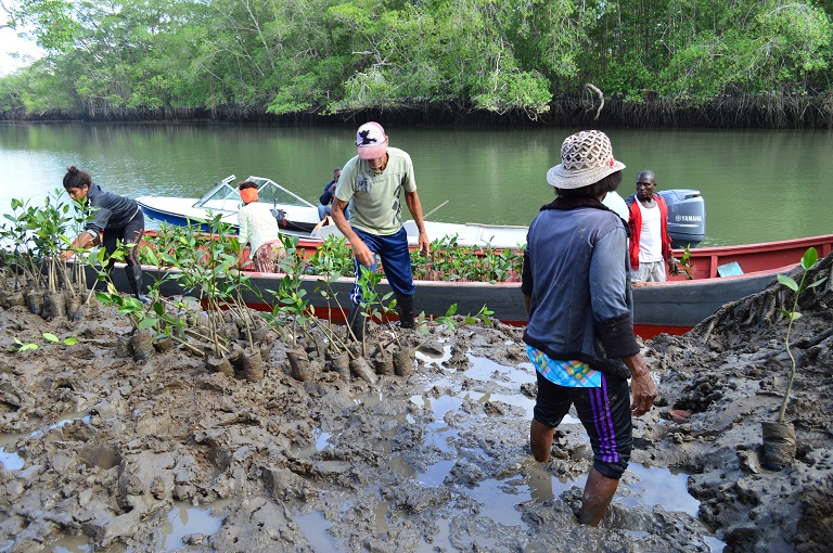 People from El Bajito community in Sanquianga taking out baby mangroves from a motorboat in a reforestation area. Photo courtesy of National Natural Parks of Colombia.