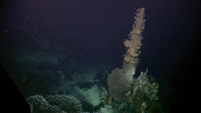 Barnacles attached to hydrothermal vent spires feeding at Kawio Barat. Image courtesy of NOAA Okeanos Explorer Program, INDEX-SATAL 2010