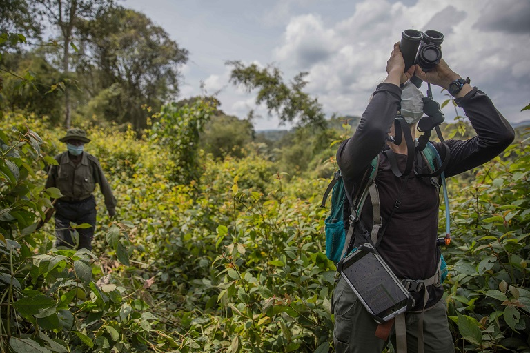 Primatologist Amy Porter studies Grauer's Gorilla's social interactions, as well as the species's feeding ecology and ranging behavior. Photo by Thomas Nicolon
