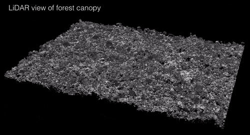 LiDAR view of forest canopy. Image courtesy of David Marvin.