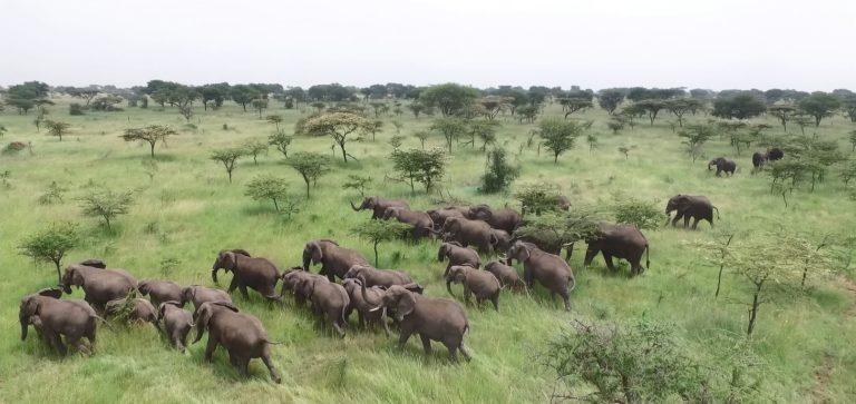 raiding-herd-from-air
