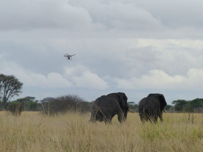 elephants-pushed-with-drone