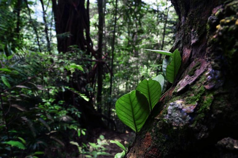 Mount Leuser National Park. Photo by Aria Danaparamita