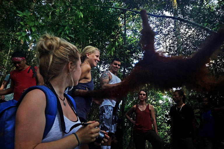 An orangutan reaches towards a tourist in Mount Leuser National Park. Photo by Aria Danaparamita