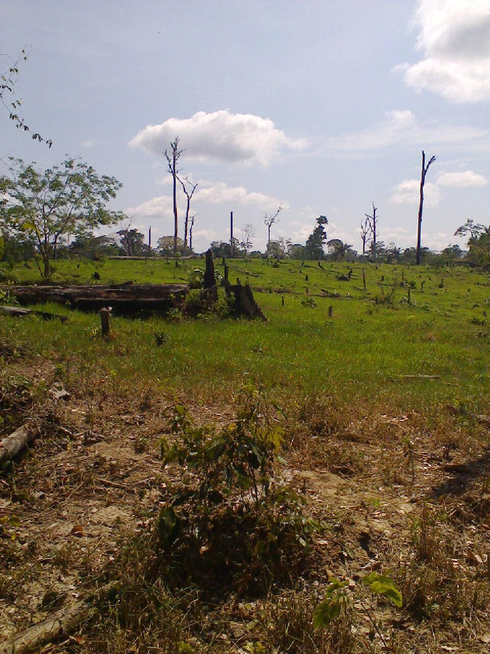 Deforestation by Plantaciones de Pucallpa SAC. Photo by Iván Flores