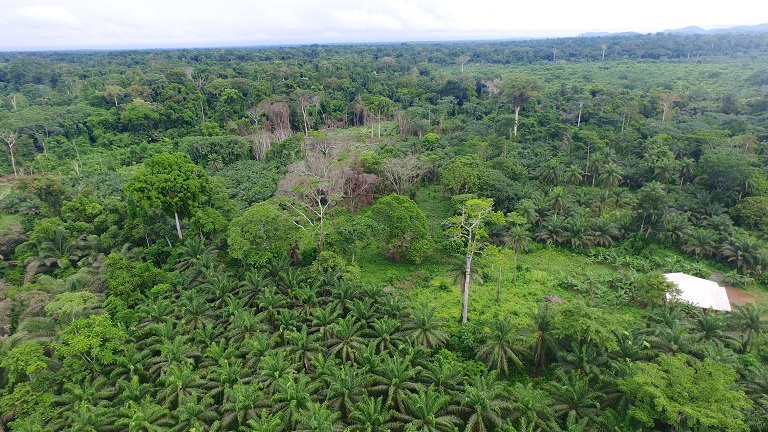 A bird's eye view of an oil palm plantation with the rainforest peeking in from the background near Douala in Indonesia. Photo by: M.Edliadi/ CIFOR/Flickr