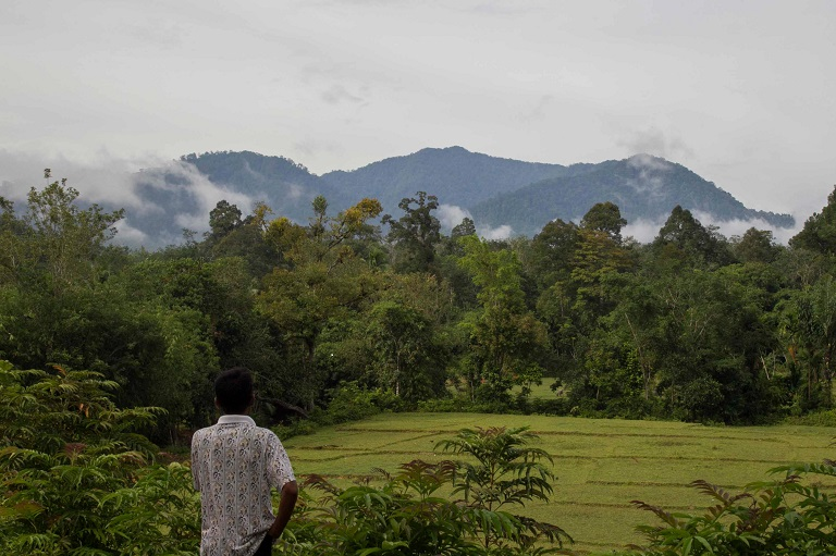 A Lubuk Beringin villager overlooks a village forest from the Dusun Buat village in Jambi, Indonesia. Photo by: Tri Saputro/CIFOR/Flickr