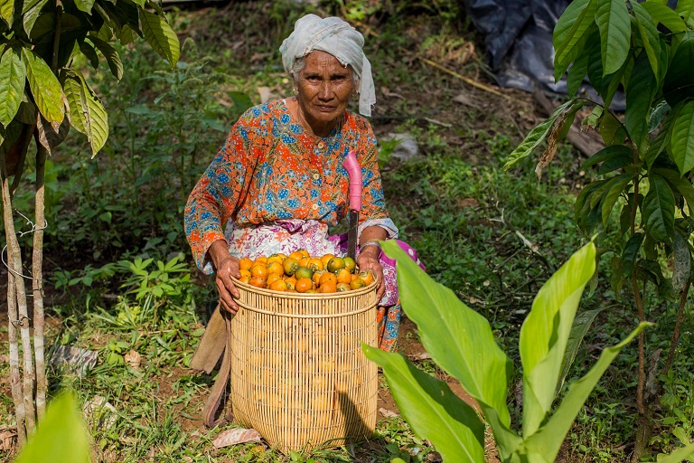 A Lubuk Beringin villager, Rahimah, 70, harvests palm nuts for palm oil on her agroforestry farm at Lubuk Beringin village in Jambi province, Indonesia. Photo by: Tri Saputro/CIFOR/Flickr