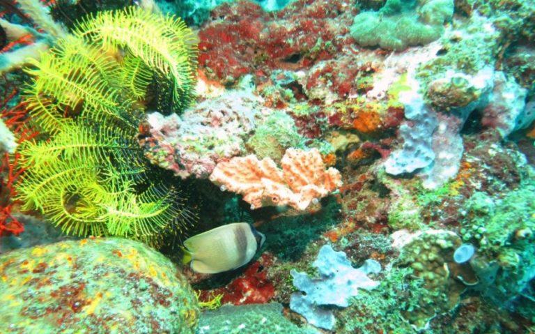 Natural coral reef