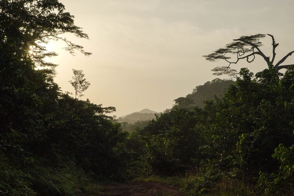 The forest of Liberia. Photo by Ashoka Mukpo for Mongabay.