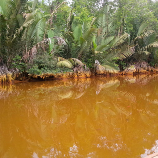 Eutrophication in Sungai Merah
