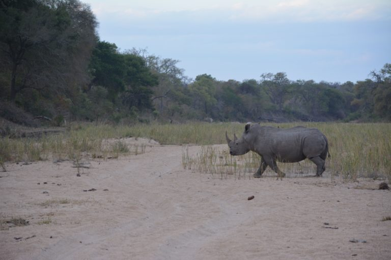 Innovative technology creates safe haven for rhinos