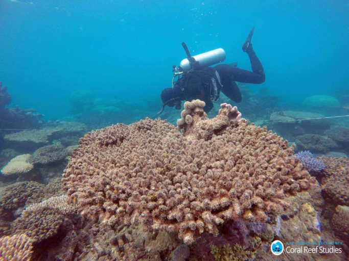 Scientists assess coral mortality on Zenith Reef following the bleaching event, Northern Great Barrier Reef, November 2016. Photo credit: Andreas Dietzel, ARC Centre of Excellence for Coral Reef Studies.
