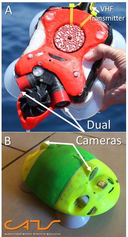 The first (A) and current (B) iterations of the video-enabled suction cup tags this study used to examine whale feeding behavior. Photo credit: Cade et al. 2016.