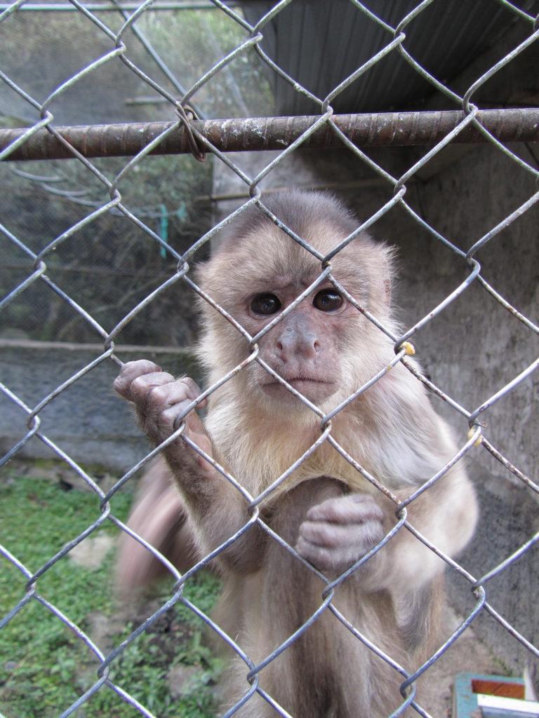 biodiversidad-extincion-trafico_de_especies-amazonia-conservacion-15-768x1024