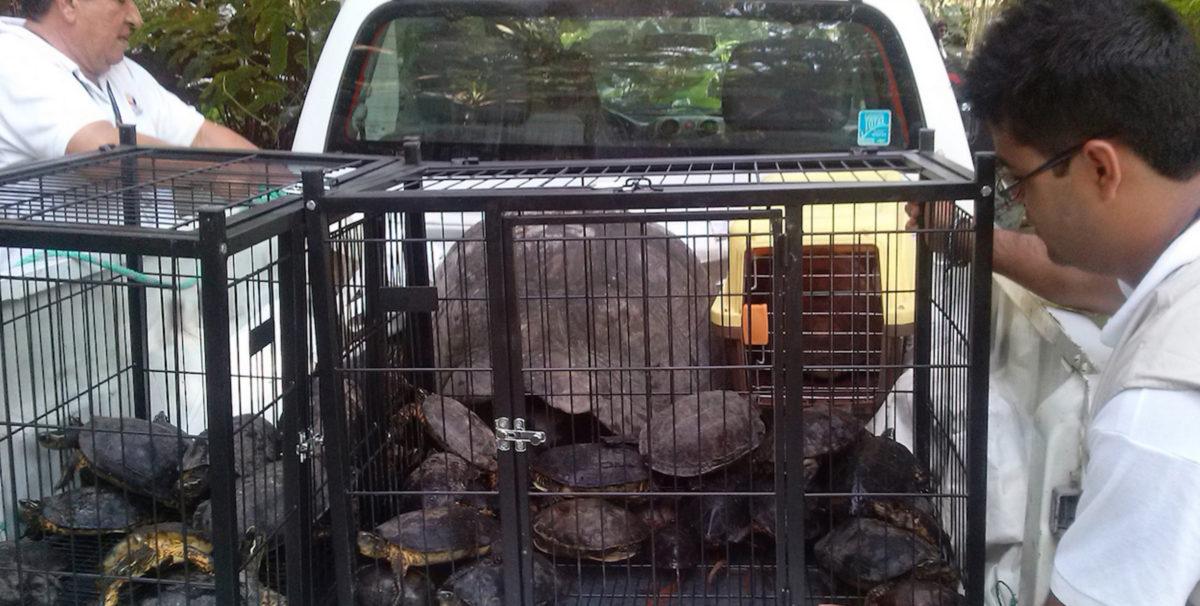 wildlife-trafficking-2