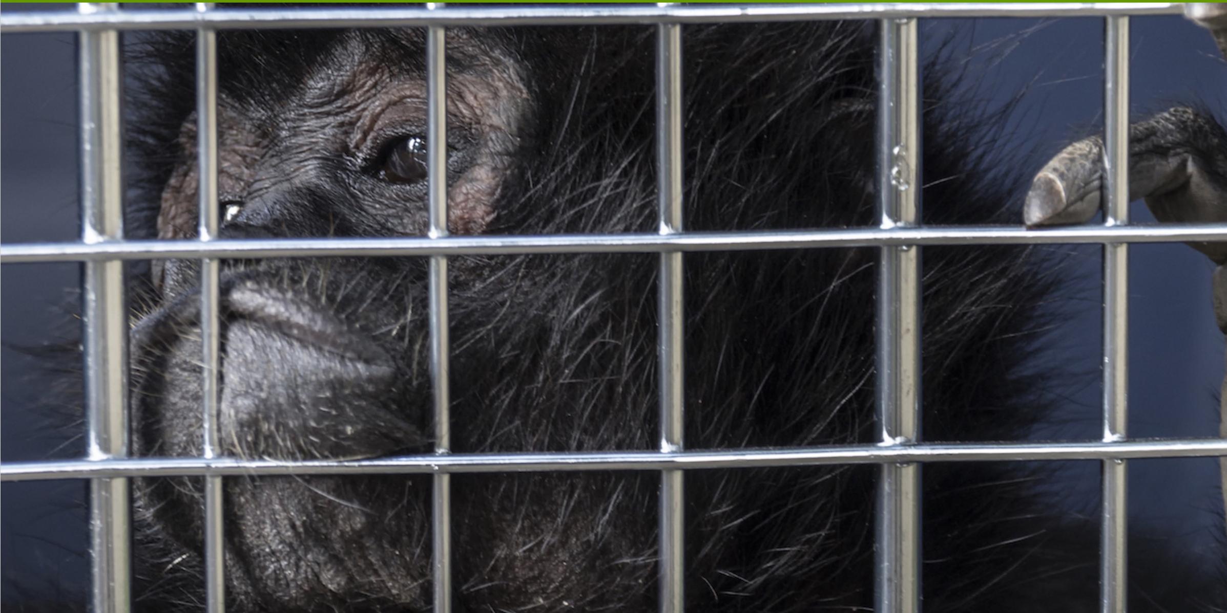 wildlife-trafficking-ecuador-5