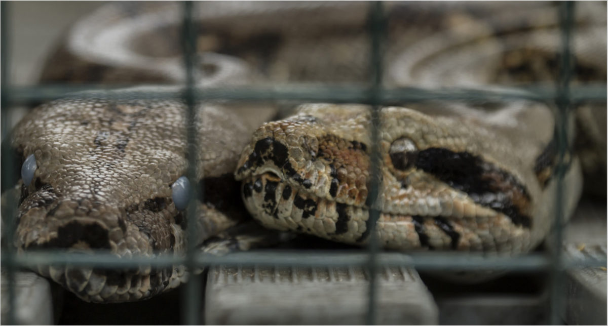 wildlife-trafficking-ecuador-9