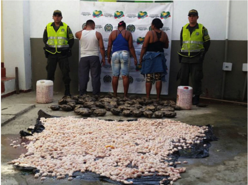 wildlife-trafficking-colombia-10