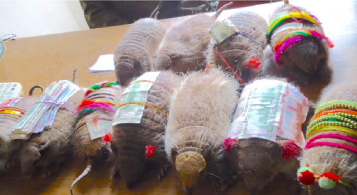 wildlife-trafficking-bolivia-9