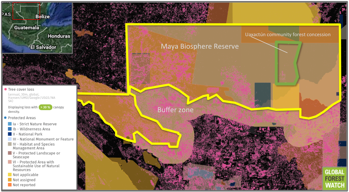 The Maya Biosphere Reserve is made up of several protected areas - including national parks - and forestry concessions. High levels of tree cover loss surround and infiltrate the reserve, but the area comprising the Uaxactún community concession is far less affected by deforestation activities.