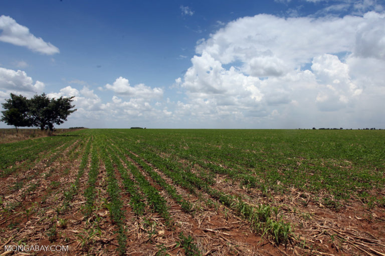 Planted soy fields in Colombia. Photo by Rhett A. Butler