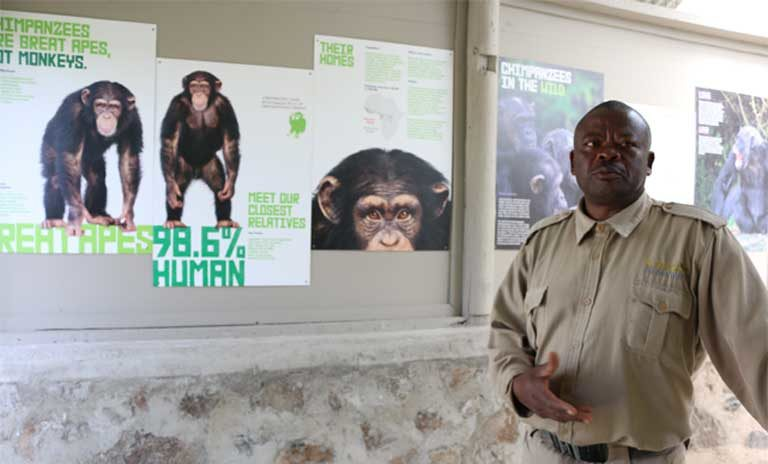Charles Musasia a tour guide and chimpanzee care giver explaining the life experience of a rescued chimpanzee at the sanctuary. Chimps rescued from captivity in private zoos, collections and circuses are too acclimated to humans to ever be released to the wild and will spend the rest of their lives at the chimpanzee sanctuary. Photo by Geoffrey Kamadi