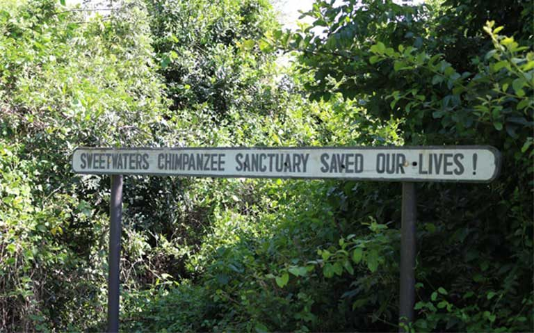 A sign along a footpath inside the Sanctuary reminds visitors of the key role the facility plays for threatened wildlife. The mission of the Sweetwaters Sanctuary is to provide a lifelong refuge to orphaned and abused chimpanzees from West and Central Africa. Photo by Geoffrey Kamadi