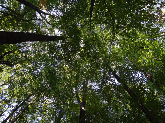 allegheny-college-bousson-environmental-research-reserve-dirt-project-site-canopy