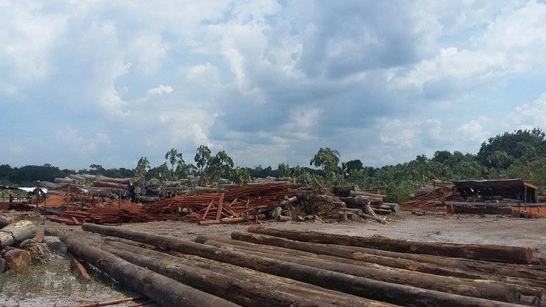 Logging concession in Kwakwani, Guyana. Photo by Akola Thompson for Mongabay
