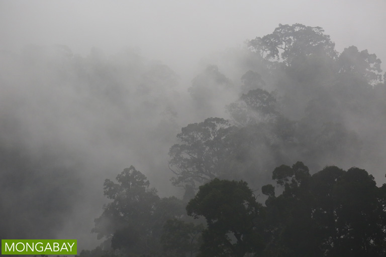 Mist enshrouds a forest in Indonesia's Bukit Tigapuluh National Park. Photo by Rhett A. Butler