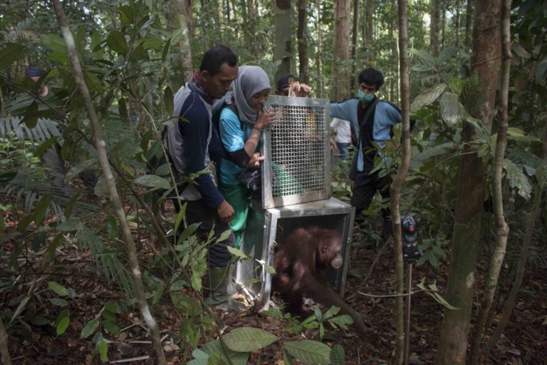 Johnny and Desi were released on 23 November 2016. Photo courtesy of International Animal Rescue.