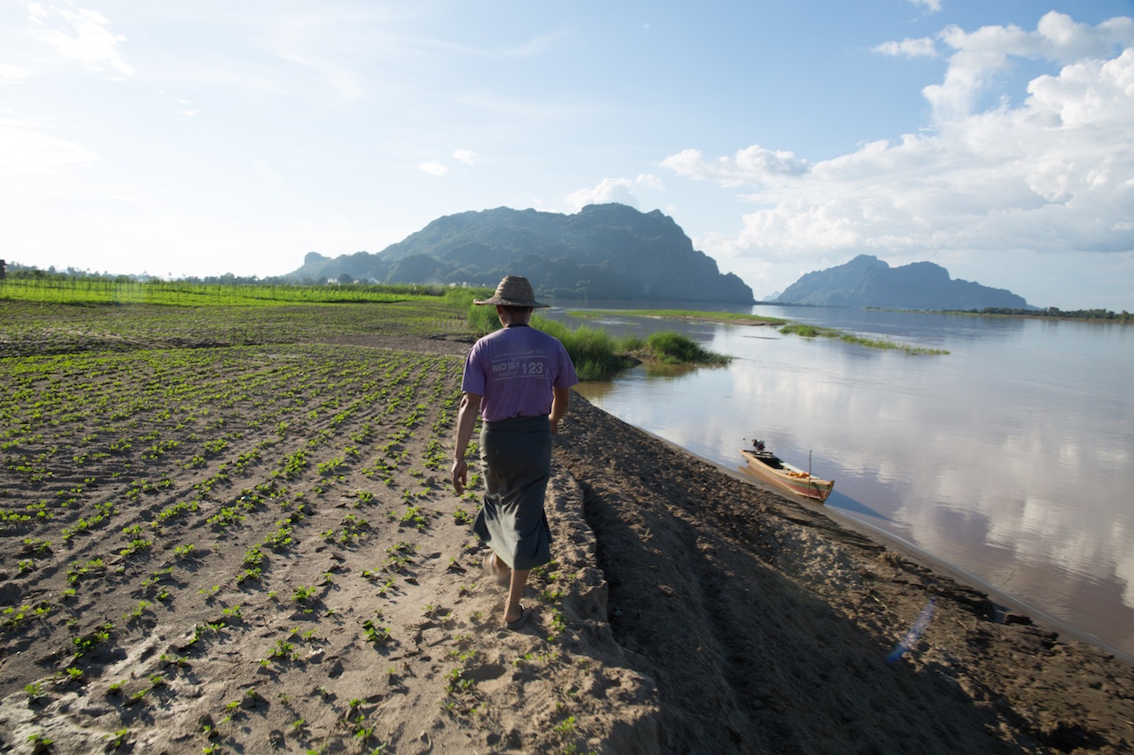 Farmers like ex-headman Aung La Teh depend on nutrient sediments from the Salween river to fertilize their crops on Kaw Ku island. They have been farming on the island for over thirty years. Photo by Demelza Stokes.