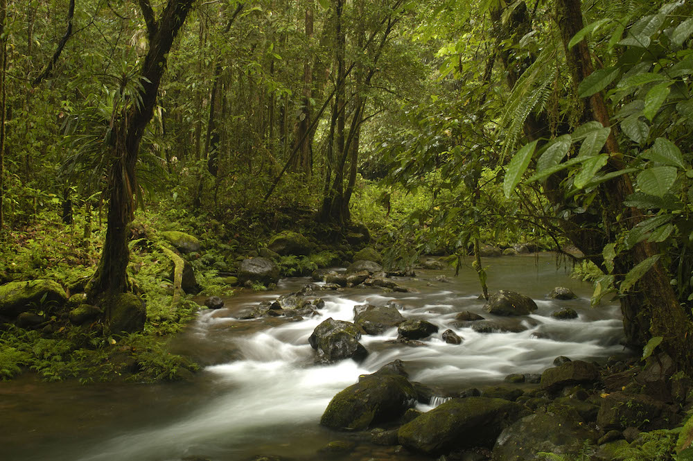 River in the rainforest near Mt. Bosavi. New Guinea's rainforests are the third-largest in the world. Photo courtesy of Markus Mauthe/Greenpeace.