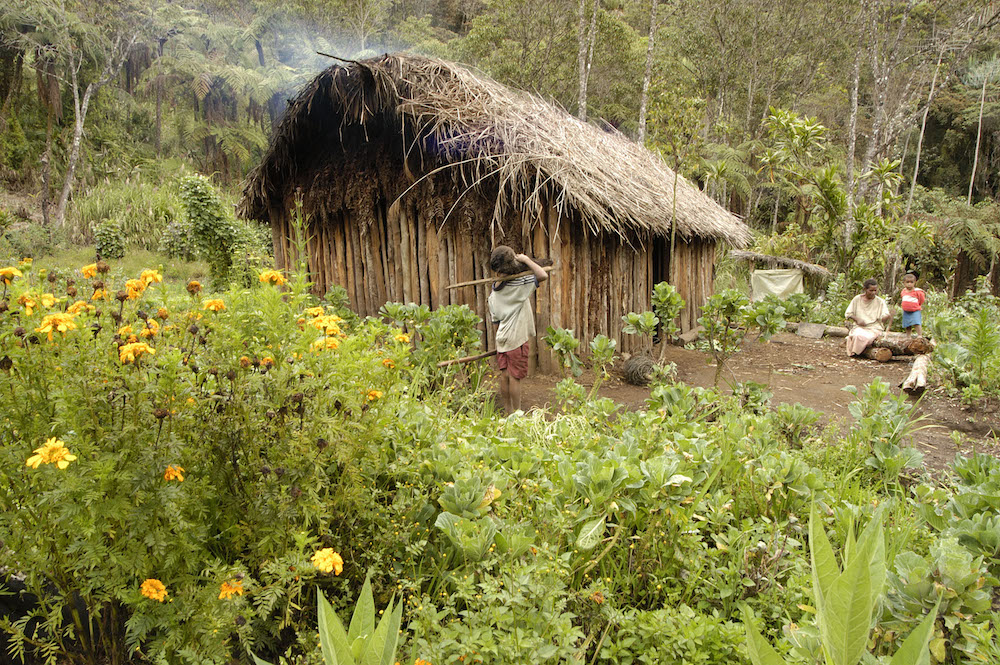A mountain hut in the highlands of Papua New Guinea. Photo courtesy of Markus Mauthe/Greenpeace.