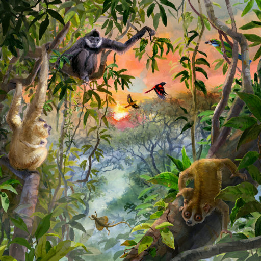 2-illustration-gibbons-pygmyloris