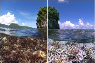 coral-reef-bleaching-before-after