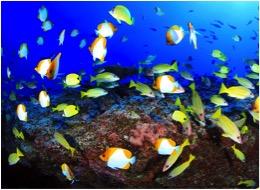 deep-reef