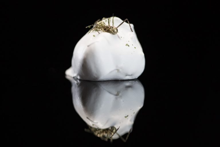 Renowned chef Alex Atala's golden Amazonian ant over coconut meringue. Courtesy Netflix Chef's Table and Chef Table Season 2. Photo by Zhana Leeson