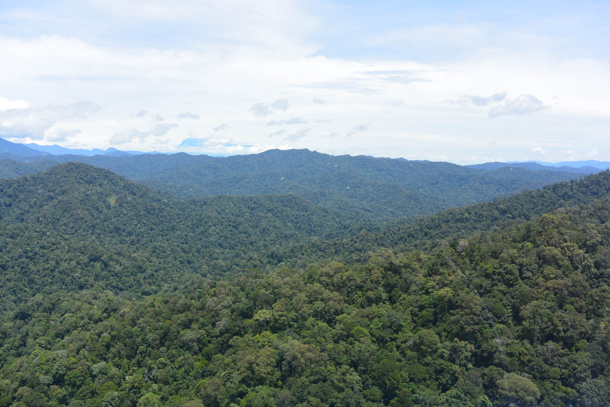FMU5's terrain ranges from 150 to 2,300 meters above sea level. © WWF-Malaysia/STCP