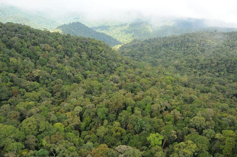 Highly productive dipterocarp forests dominate much of the Trus Madi and FMU5 highlands.