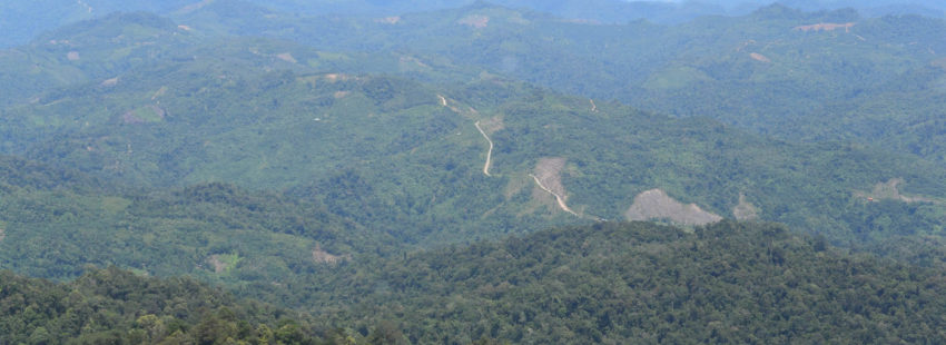 Sudden sale may doom carbon-rich rainforest in Borneo