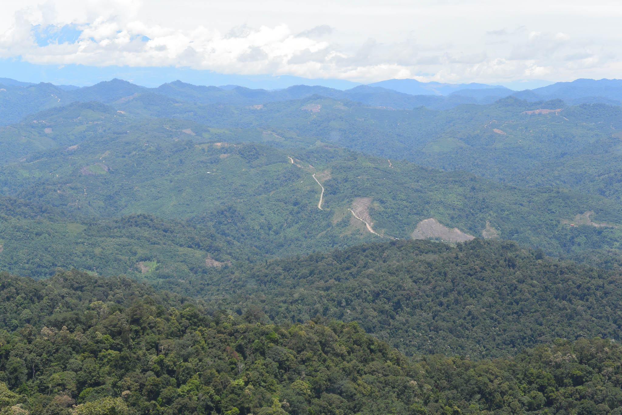 Conservation groups had been crafting an alternate future for FMU5, one that would save its forests from intensive logging. © WWF-Malaysia/STCP