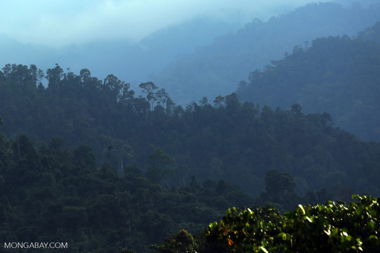 Sumatra's Leuser ecosystem covers 2.6 million hectares. It boasts 10,000 species of plant and 200 species of mammal — dozens found nowhere else on earth. Of the 6,000 orangutans left in Sumatra, 90 percent live in Leuser. Photo by Rhett A. Butler / Mongabay